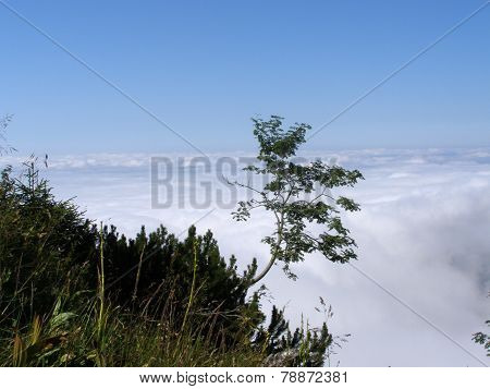 Tree growing on steep rocky mountain slope