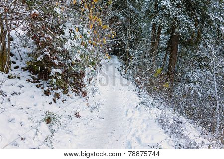 Snow Covered Forest Hiking Trail