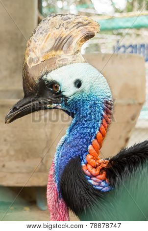 Pattaya, Thailand - January 17, 2012: ?assowary in a zoo in Million Years Stone Park