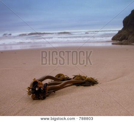 Oregon Coast Kelp