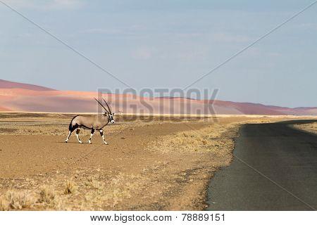 Sossusvlei Park, Namibia