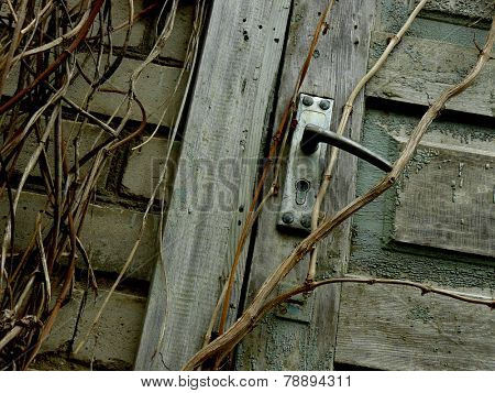 fragment of brick-wall and the door of abandoned house overgrown with lianas