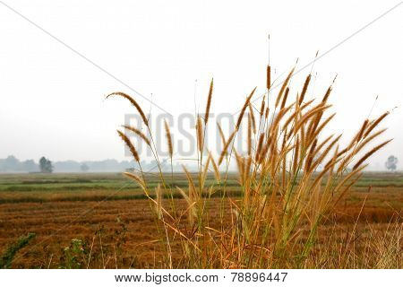 natural yellow orange color dry grass