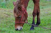 image of horses eating  - Brown horse eating grass on the field - JPG