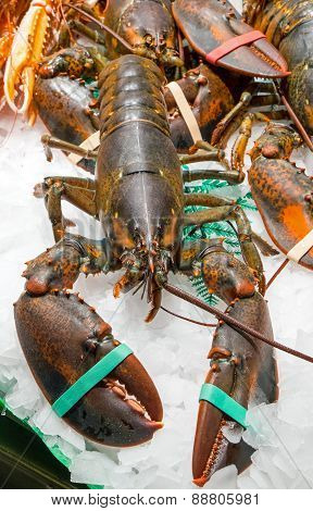 Lobster for sale at a market