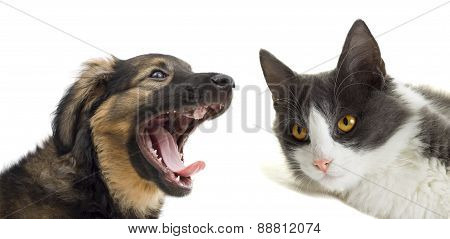 Cat And Dog Looking Sideways