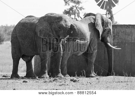 Two Huge Elephant Bulls Stand Close To Reservoir Artistic Conversion