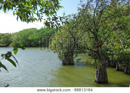 Mangrove swamp in Nicaragua