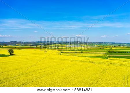 Aerial View Rural Landscape With Blooming Rape At The North Greece
