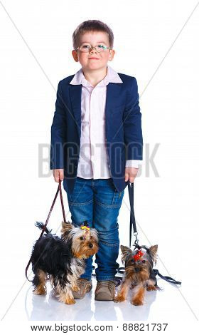 Boy with his Yorkshire terriers