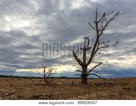 dead tree on meadow before thunderstorm