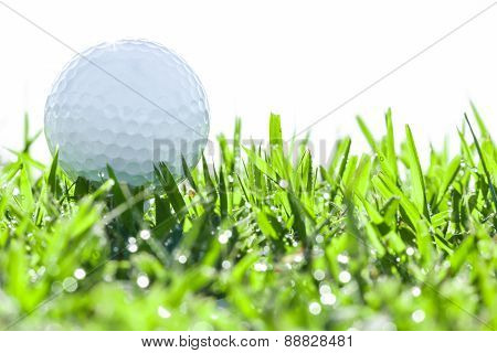 Golf Ball On Grass With Drops Water