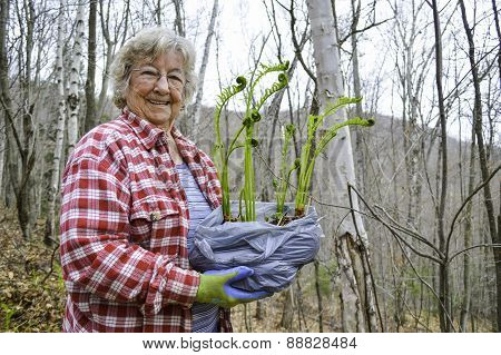 Woman Transplanting Fiddleheads