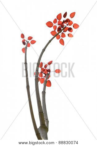 Branch of leaves isolated on a white background