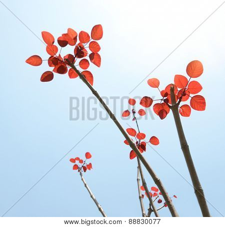 branch with red  leaves against the sky