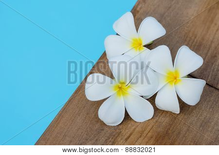 Tropical Flowers Plumeria On Swimming Pool