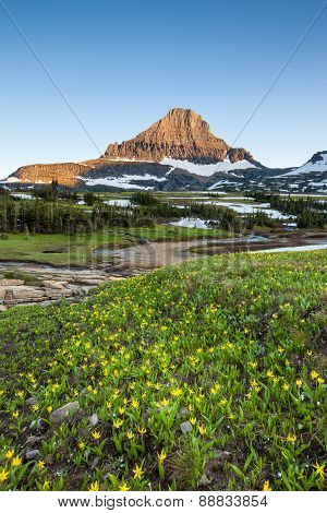 Mountain landscape and Wildflower Field At Logan Pass, Glacier National Park