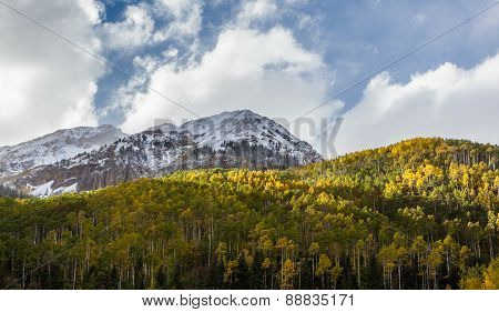 Yellow Aspen Trees In Colorado Mountains