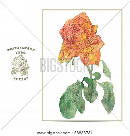 Vector illustration of a rose flower.