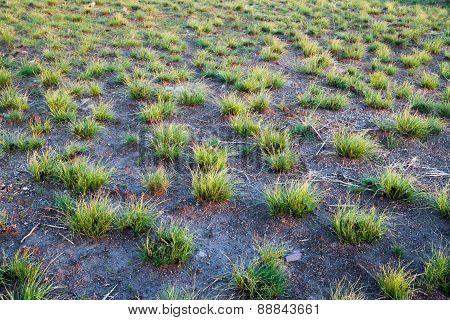 Green Grass On A Black Ground.