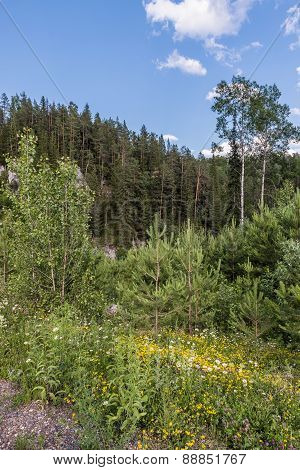 Mixed forest in the Ural Mountains.