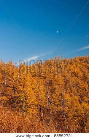 Autumn at Arshan of China