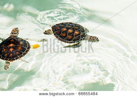 Cute Endangered Baby Turtles