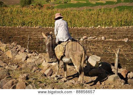 Man Riding A Donkey While Working On A Field