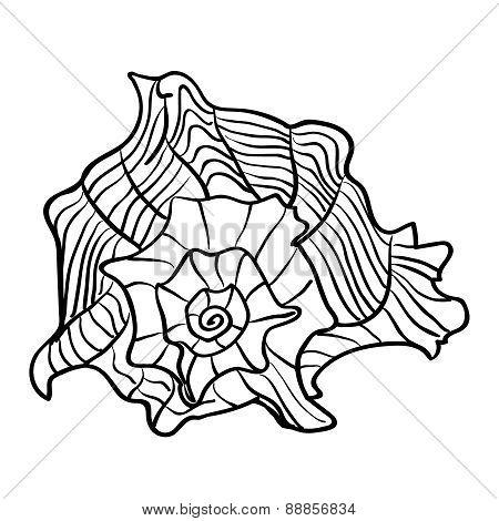 Caribbean marine hand drawn shell. Sketch cut-out vector illustr