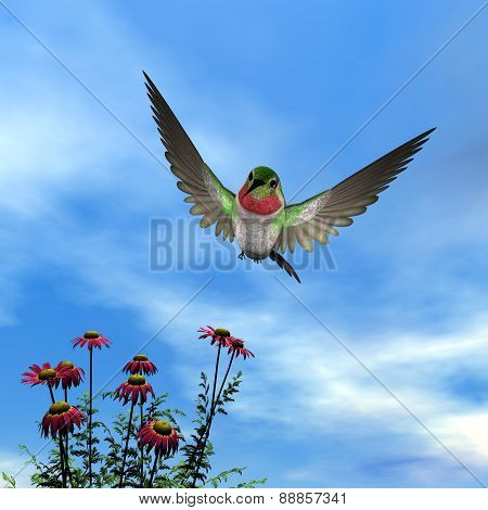 Ruby-throated hummingbird - 3D render