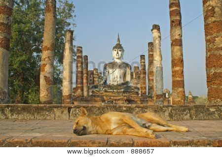 Dog And Buddha At Ruins In Sukhothai,Thailand
