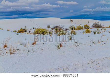 White Sands Desert Dunes of White Sands Monument National Park in New Mexico