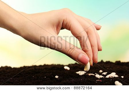 Female hand planting white bean seeds in soil on blurred background