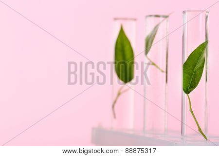 Green leaves in test tubes on pink background
