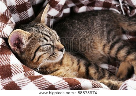 Kitten rest in plaid, closeup