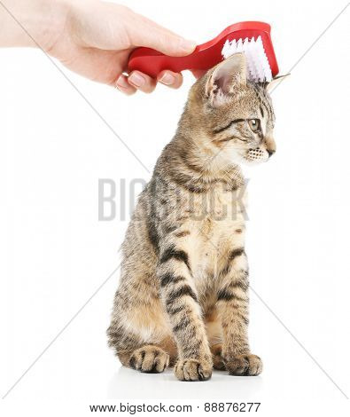 Female hand combing stripped kitten, isolated on white