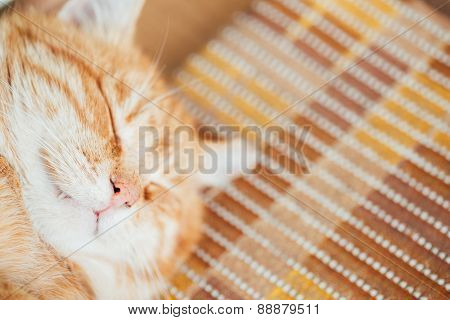 Close Up Head, Snout Of Peaceful Orange Red Tabby Cat Kitten