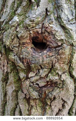 Tree Trunk With A Hollow