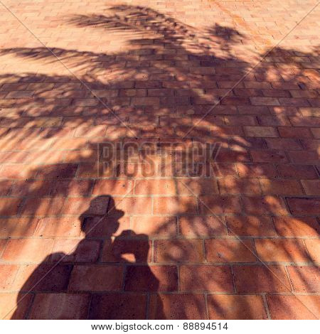 Shadows of a man and a palmtree.