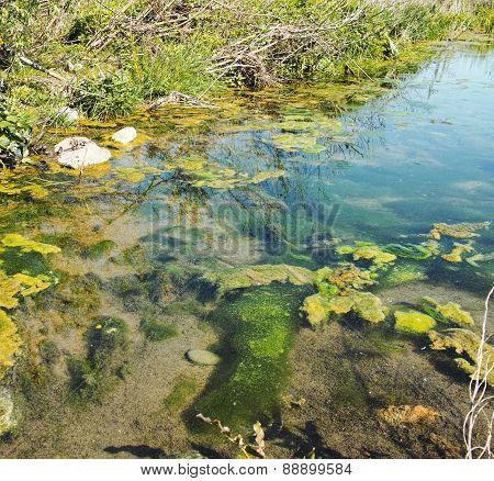 Bog Swamp