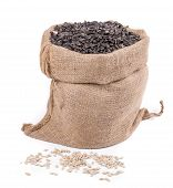 foto of sunflower-seeds  - Close up of black sunflower seeds in bag - JPG