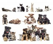 stock photo of puppy kitten  - set of puppies and kittens on a white background - JPG