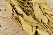picture of bundle  - Bundle of branches with dry bay leaves - JPG