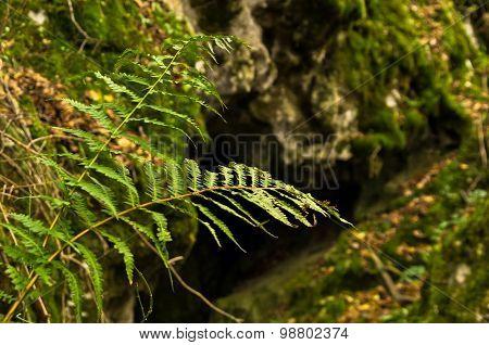 Hidden mountain caves at Miroc mountain and Djerdap national park