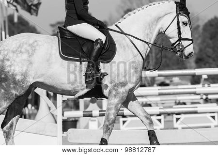 Horse Rider Show Jumping