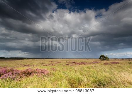 Storm Clouds Over Marsh With Flowering Heather
