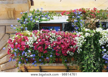 Balcony Twined With Flowers Of Petunias