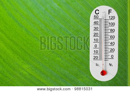 Thermometer On Green Leaf