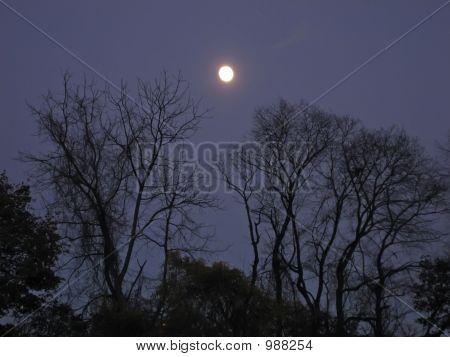 Autumn Moon 1