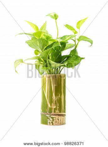 Houseplant In Bamboo Vase